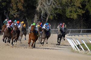 Hvordan spiller man på hestevæddeløb?