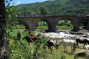 Oplev spanske vildheste i Andalusien