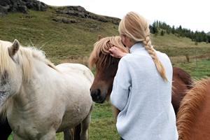Giv din hest alt det bedste