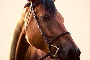 Sådan gør du din hestestald klar til vinteren