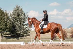 Se det bedste hestesport live på Zibrasport