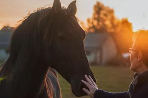 Sådan får du mere tid til din hest i hverdagen