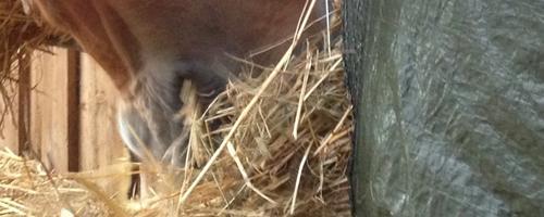 """Verdens billigste høpose & """"haybar"""""""