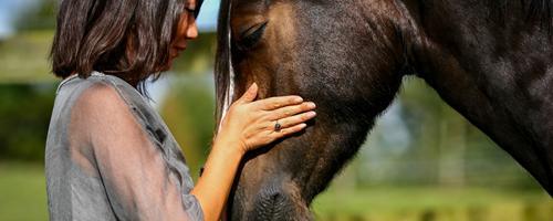 Hestens 4 kernepersonligheder
