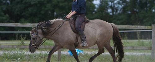 """Er jeg for tung til min hest?"""