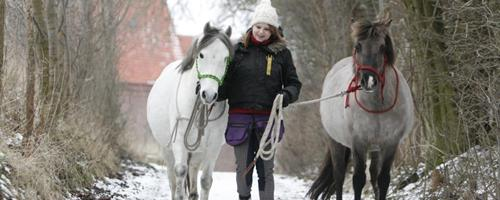 Er danske heste dårligt opdragede?