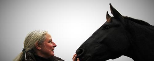 Den unge hest - Forberedelse til ridehest