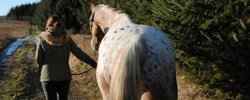 Går min hest korrekt?