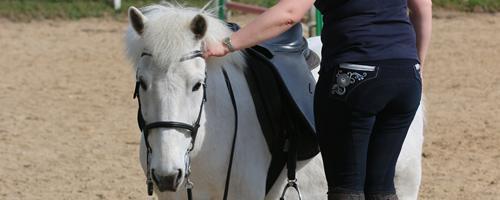 """Signaltyper - Forstår din hest hvad du """"siger""""?"""
