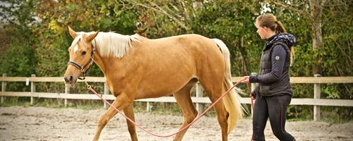 Hestekøb