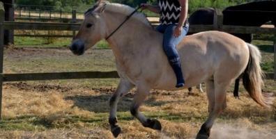 Forebyg skader hos din hest