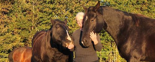 Hvad er dit mål med at have hest eller part?