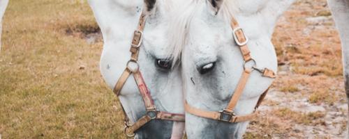 Glem ikke hestene i juletiden