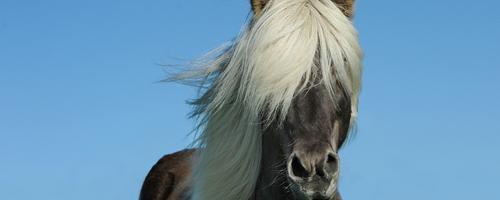 Lån nemt og billigt penge til din næste hest eller uds...
