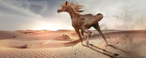 De tre bedste computerspil til hesteentusiaster