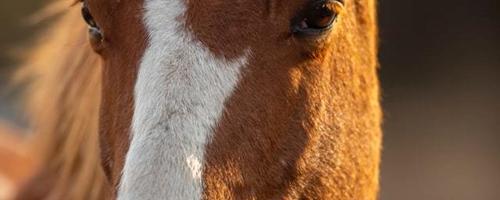Sådan finder du den rette gave til en hesteelsker