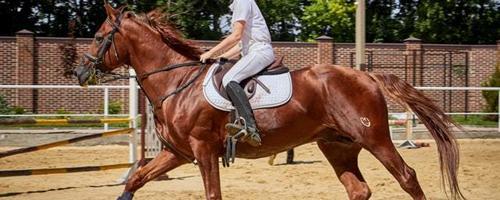Sådan vedligeholder du effektivt en hestestald