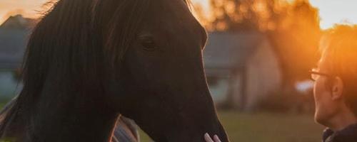 Tre skjulte hestesygdomme, som du skal være ekstra opm...
