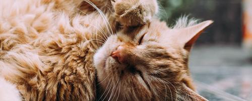 Skab det bedste liv for din kat