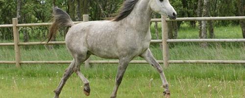 Hestens rygfunktion - del 2