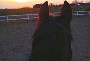 Den arbejdsglade hest