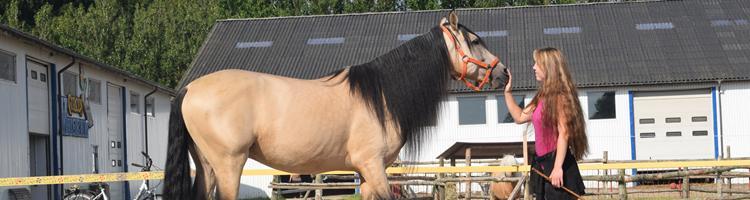 Jordarbejde:Grundtræningen af den nye hest