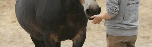 Hvorfor respekterer vi ikke hestens personlige rum?