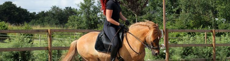 Hesten - Vores spejlbillede og bedste læremester
