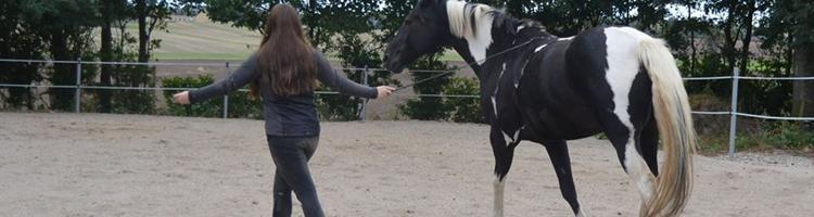 Hesten er det mest ærlige væsen jeg kender.