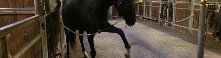 Hesten, der skraber på staldgangen