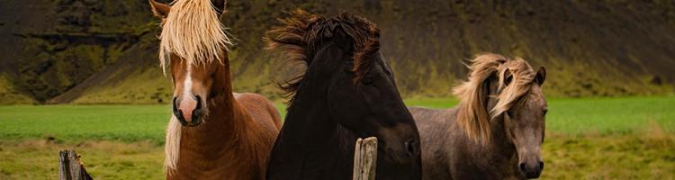 3 måder at flette håret på din hest