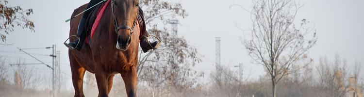 Guide: Ferie på hesteryg i Island eller Thy