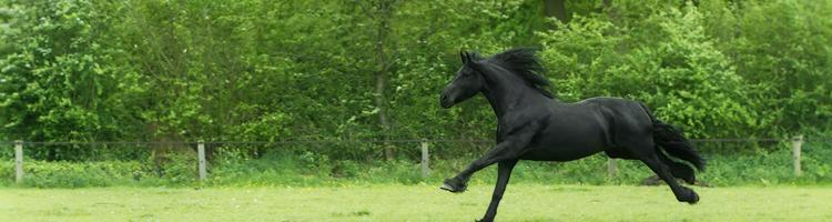Sælg din hest og udstyr på auktion og slip for besvær