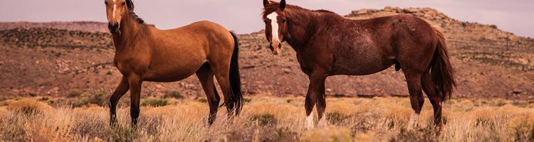 Har du styr på reglerne for kørsel med hestetrailer?