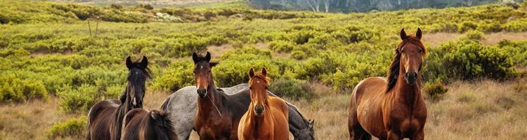 Sådan kan CBD olie hjælpe din hest til et sundere liv