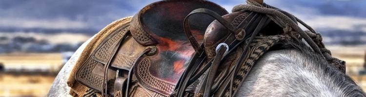 Tjen penge til hesteudstyr på nettet: Hvilke mulighede...