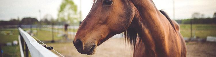 Gode råd til køb af hestetrailer