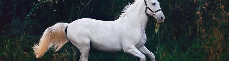 Mangler du udstyr til din hest? Sådan kan du spare op