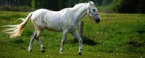 Helseprodukter til heste er kan give værdi