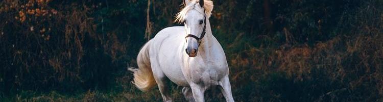 Tre gode råd til, hvordan du bygger din egen hesteboks