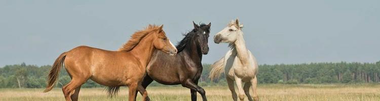Sådan påvirker CBD din hest