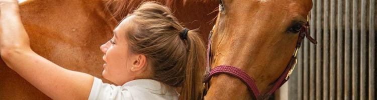 Sådan passer du godt på din hest