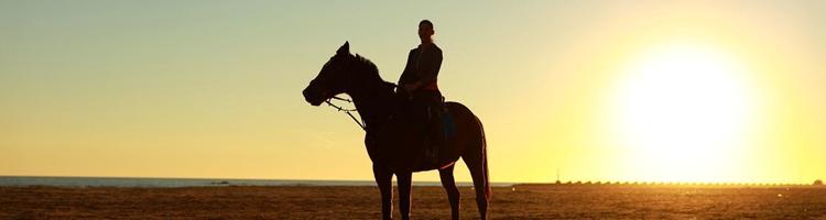 Sådan indretter du det perfekte værelse til den hestei...