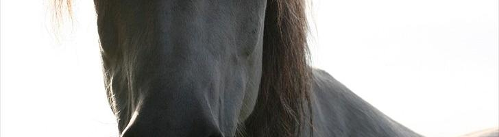Min hest er bange for at være alene!