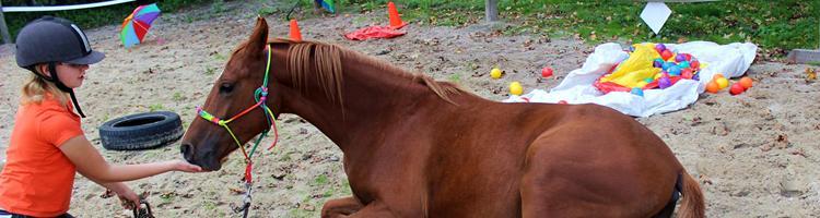 Er du i nuet når du er sammen med din hest ?