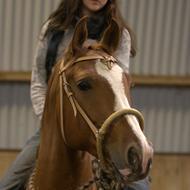 Mich - Nu med pony