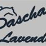Sascha L