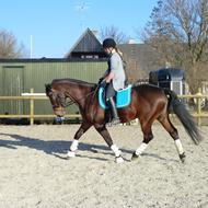Erika (nu uden hest..)