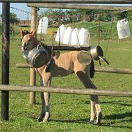 US-Mustang >Horsetalker<