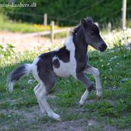 Camilla Kaaber's Miniature-Heste.